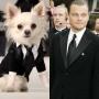 Хроники высокой моды в мире собак