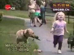 Смешные видеоролики с собаками
