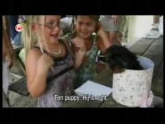 Смешное видео о собаках