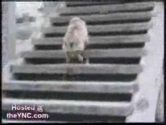Подборка смешных видео о собаках