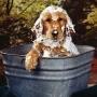 Как сделать мытье собаки приятным