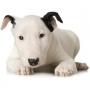 Как правильно чистить собаке уши