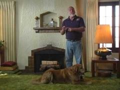 Как отучить собаку от лакомства