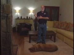 Неосознанное обучение собаки