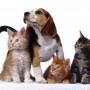Кошки или собаки: кто лучше?