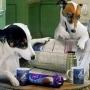 Собаки умнее, чем кажется
