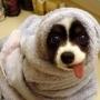 Тест для собак на уровень интеллекта