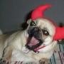 Почему собаки могут быть агрессивны к своим хозяевам