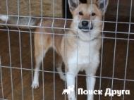 Породы собак средних размеров с фотографиями и описаниями