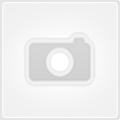 Немецкий курцхаар – фото, видео, описание породы, отзывы владельцев