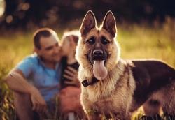 Собаки определяют раковых больных по запаху