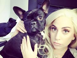 В соцсетях появились фотоблоги собаки Леди Гаги