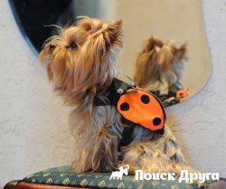 Как выбрать шлейку для собаки