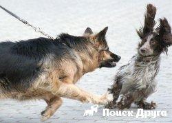 Как разнять драку двух собак