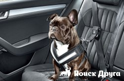«Шкода» позаботилась о безопасности собак