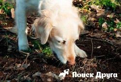 Почему собака ест экскременты