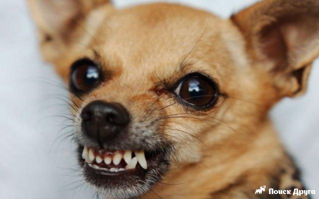 собака лает картинки