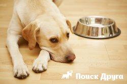 Собака не пьет воду