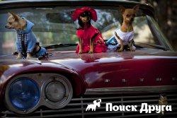 На Кубе прошел собачий карнавал