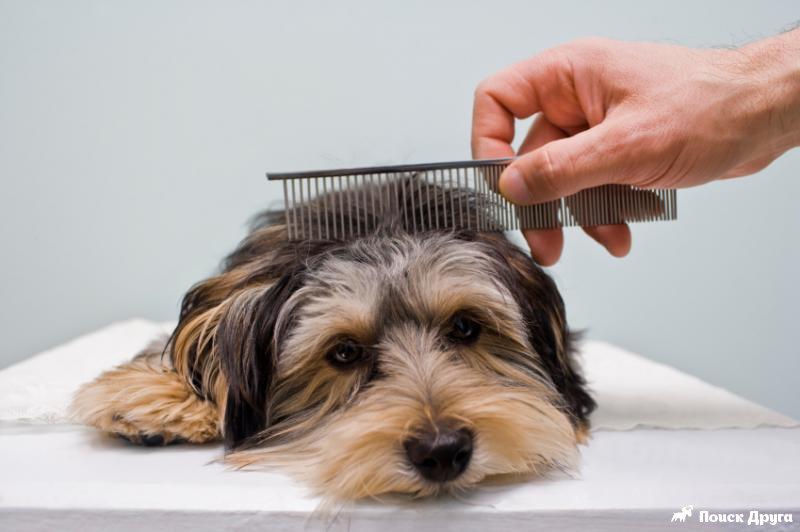 Правильный уход за разными типами шерсти собак