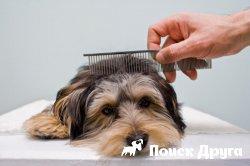 Как приучить собаку к расчесыванию?