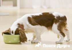 Классы сухих кормов для собак