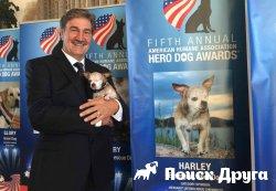 Собаки-герои получили заслуженные награды