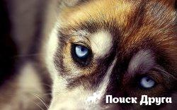 Ученые установили место появления первых собак