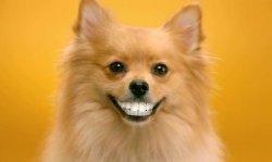 Собаки могут обмениваться эмоциями