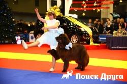 Собаки со всего мира станцуют в Москве