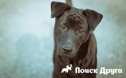 Бездомных собак представят на выставке в Москве