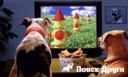 У телеканалов для собак появились перспективы