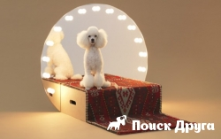Проект Architecture for Dogs набирает популярность