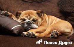Собаки видят во сне хозяев