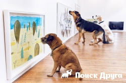 В Лондоне открыли «собачью» арт-галерею