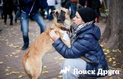 В Москве прошел фестиваль бездомных собак