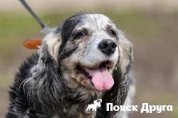 Ученые выяснили, что собаки седеют из-за стрессов