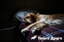 Власти Москвы ограничат содержание в квартирах крупных собак