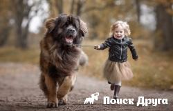 В Москве хотят запретить больших собак