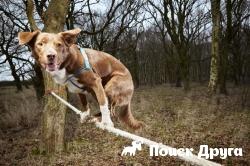 Китаец научил собаку ходить по канату