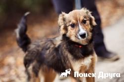 В Москве прошла выставка бездомных собак WOOF FEST