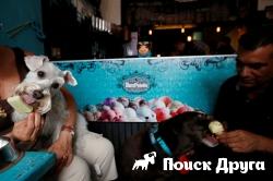 В Мексике открылось уникальное кафе для собак