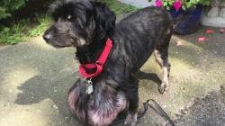 Собаке удалили опухоль весом в 3 килограмма