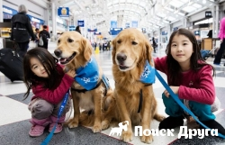 В аэропортах США запустили щенячью терапию