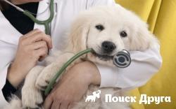 Минздрав введет электронный формат рецептов для собак