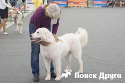 В Перми прошла всероссийская выставка собак