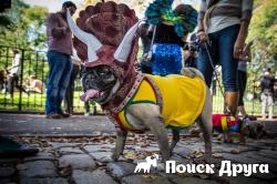 В Нью-Йорке на Хэллоуин прошел парад собак