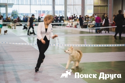 В Новосибирске прошла выставка умных собак