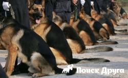 В Эквадоре 16 собак-полицейских ушли на пенсию