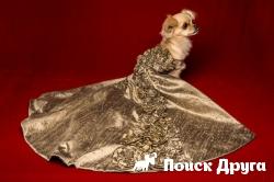 В Англии продают платья для собак по 50 тысяч фунтов